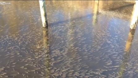 Riprende il canale, quello che vede in acqua è impressionante