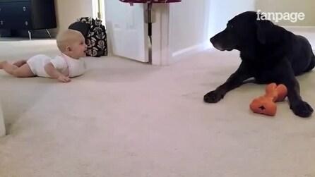 Bebê engatinha para tentar alcançar seu cão: confira a reação inesperada