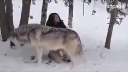 O lobo se aproxima da garota, o que ele faz vai deixar você sem palavras