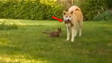 Un cane si avvicina a 2 cuccioli di volpe rimasti orfani: quello che fa è sorprendente