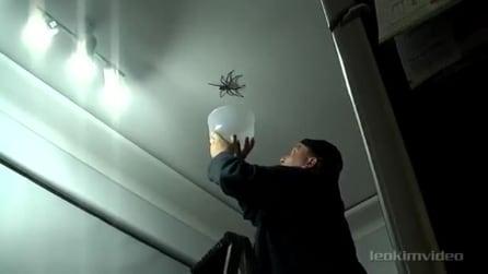 Prova a catturare un grosso ragno per mostrarlo alla figlia, ma qualcosa va storto