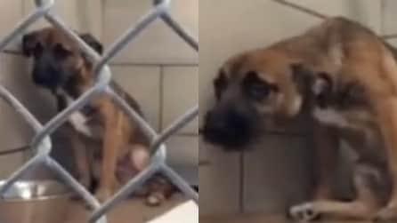Il cucciolo piange da solo in un angolo: la scena che vi scalderà il cuore