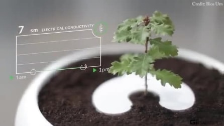 L'applicazione che trasforma le ceneri dei defunti in alberi