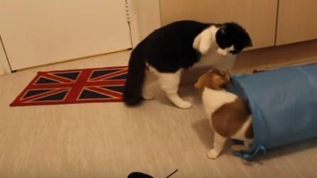 Cane e gatto si vedono per la prima volta: l'incontro è esilarante