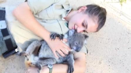 Le tenerissime immagini di un Koala che si lascia fare le coccole!