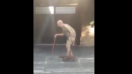 L'amicizia dura una vita: il cane aspetta il padrone nella lenta passeggiata
