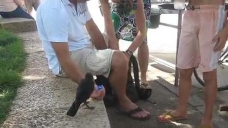 Il corvo si avvicina ai turisti per mangiare e bere: guardate cosa succede