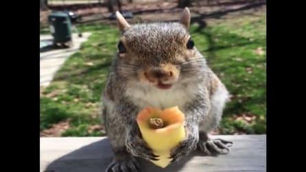 Un torsolo di mela allo scoiattolo: il piccolo roditore guardate cosa fa
