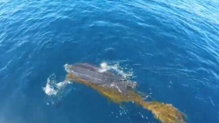 Nuota accanto a lui e chiede aiuto: quest'uomo mette a rischio la vita per salvare la tartaruga