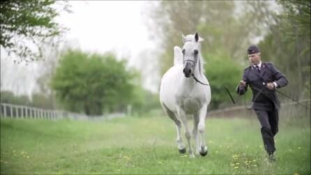 È uno dei cavalli più costosi al mondo: la sua bellezza vi colpirà