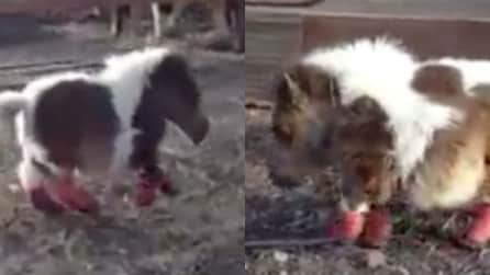 La storia di Roo, il cavallo affetto da nanismo: la sua simpatia vi conquisterà