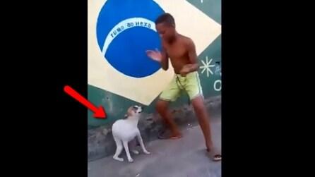 Il bambino balla una canzone brasiliana e il cane cerca di imitarlo, riuscirete a non ridere?