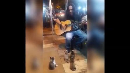 Il musicista suona in strada: accorre un pubblico d'eccezione