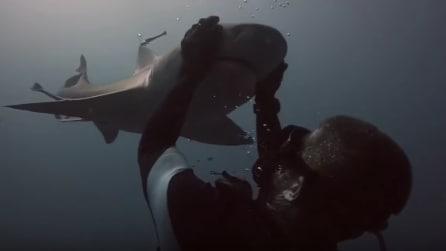 Blondie, lo squalo che ama le coccole