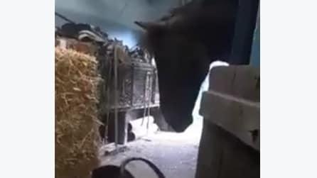 Il bimbo piange e il cavallo trova il modo di farlo smettere: la scena è di una dolcezza unica