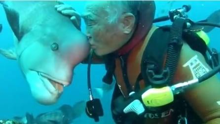 In 25 anni di immersioni il sub giapponese incontra sempre lo stesso pesce: ciò che nasce tra i due è unico