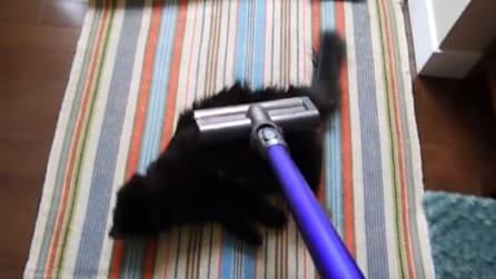 Tutti i gatti hanno paura dell'aspirapolvere: lui invece sembra proprio esserne innamorato