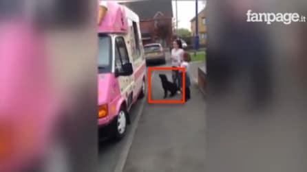 Il cane vuole il gelato: si mette in fila e guardate cosa fa
