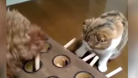 Un gatto alle prese con delle talpe giocattolo: chi la spunterà?