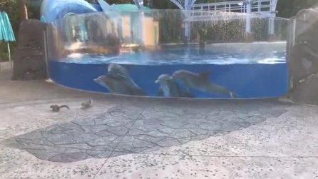 Gli scoiattoli si avvicinano alla vasca dei delfini: ciò che succede è esilarante