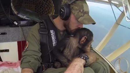 """Mussa, lo scimpanzé in volo verso la libertà: """"I cuccioli hanno bisogno di amore non di una gabbia"""""""