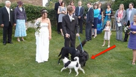 """Gli sposi posano per le foto con i loro cani: all'improvviso, l'assurdo """"imprevisto"""""""