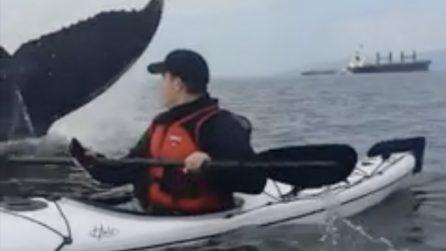In mare con la canoa e all'improvviso qualcosa di gigantesco emerge dall'acqua