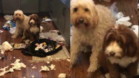 Rientra a casa e trova un disastro: le reazioni dei cani sono divertentissime