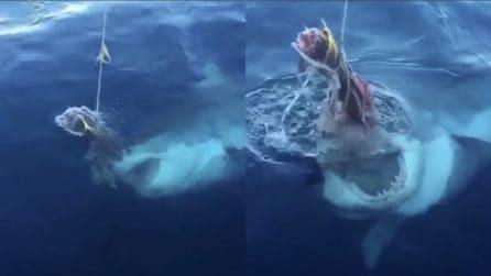 L'enorme squalo sta per afferrare la sua preda: le incredibili immagini in slow motion