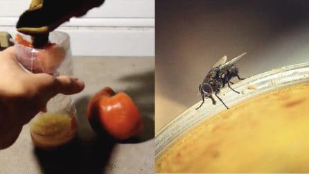 Trappola naturale per tenere lontane le mosche: ecco come farla