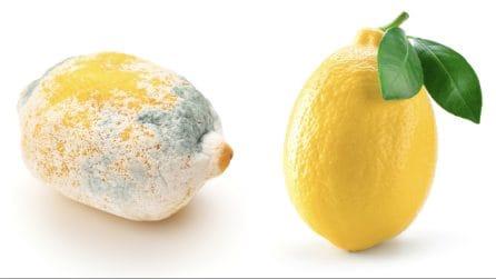 Come conservare i limoni: il metodo semplice ed efficace