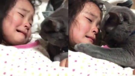 La bimba sta male e piange: il suo gatto prova a consolarla dolcemente