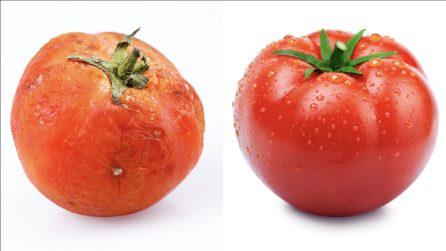 Come conservare i pomodori più a lungo: il trucco per mantenerli freschi