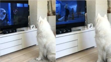 Sente un ululato nel cartone animato in tv: la reazione del cane è impagabile