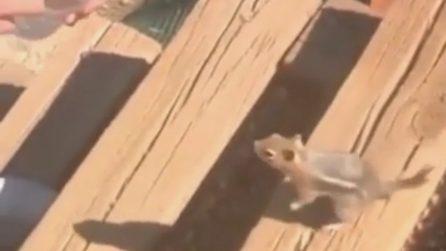 """Lo scoiattolo """"parla"""" con i gesti: la sorprendente richiesta ai turisti"""