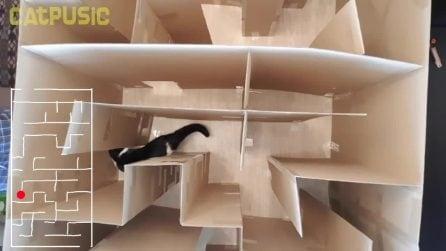 Preparano un labirinto per il loro gatto: appena dentro il felino sorprende tutti