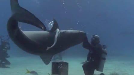 Faccia a faccia con un enorme squalo: le impressionanti immagini subacquee