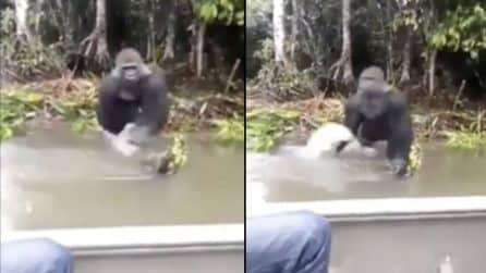 I turisti sono sulla barca: la scimmia si avvicina all'improvviso e gli fa un terribile scherzo