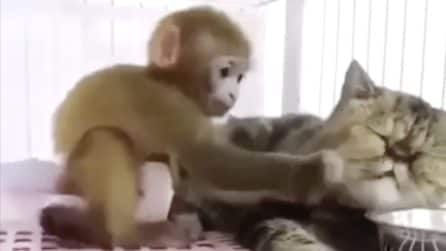 Il gatto sta dormendo, quello che fa la scimmia è esilarante