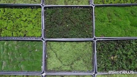 Solo in Giappone: il meraviglioso mondo del muschio da giardino