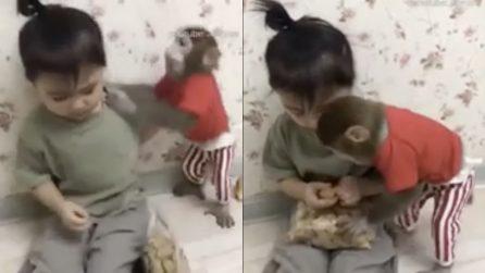 Il bambino cerca di mangiare, ma la scimmia glielo impedisce: il litigio è esilarante
