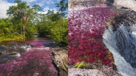 Sembra un quadro eppure esiste davvero: la magia del Caño Cristales, il fiume più bello del mondo