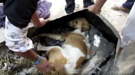 Trovano un cane bloccato in un bidone di catrame: dopo la spaventosa scoperta fanno di tutto per salvarlo