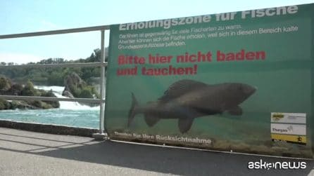 Moria di pesci nel Reno, la temperatura dell'acqua sui 27 gradi
