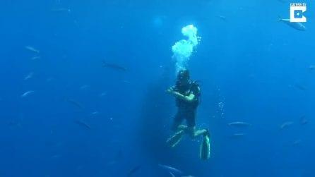Un branco di pesci inseguito da un grosso squalo: si avvicinano al sub per salvarsi la vita