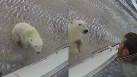 Il bellissimo orso sembra indifferente e tranquillo: ecco cosa accade