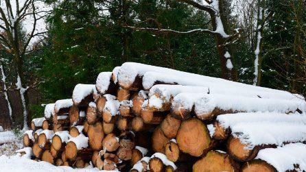 "Nascosta in mezzo ai tronchi c'è una donna ""nuda"": riuscite a vederla?"