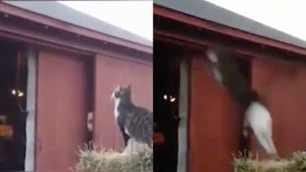 """""""Salto o non salto?"""": Pieraccioni e il dilemma del gatto"""