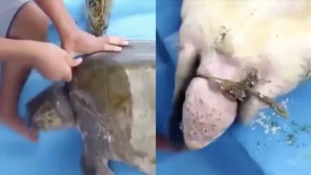 La tartaruga rischia di morire strozzata: quando l'inquinamento mette in pericolo la vita sul pianeta