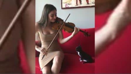 La magia del violino: il gattino resta stregato dalla performance